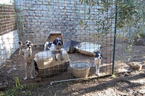 Tenta di annegare cane dell'ex: è il proprietario di un canile lager