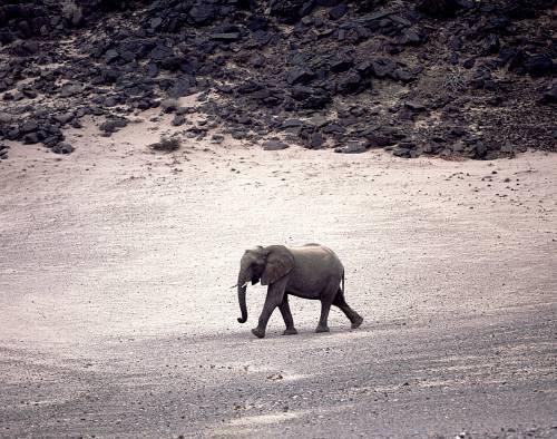 In Namibia, dove lo zoo siamo noi esseri umani