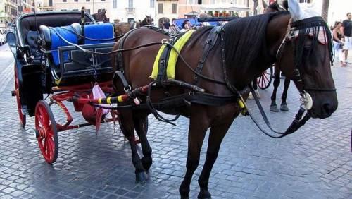 Tragedia sfiorata: cavallo scivola e cade a terra in pieno centro