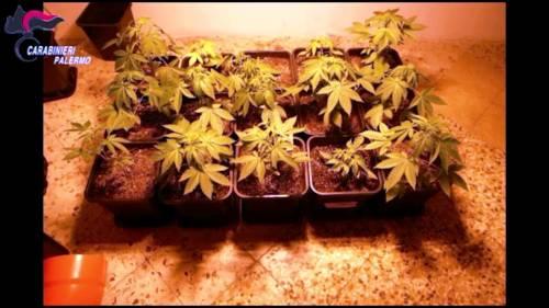 """La famiglia con il """"pollice verde"""": piantagione di marijuana in casa"""