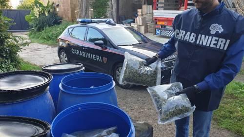 Quei 112 chili di marijuana nascosti in un terreno agricolo