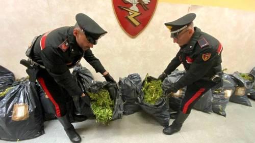 Fuga da film con 93 chili di erba in auto: arrestati