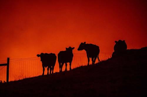 Inferno di fuoco in California 6