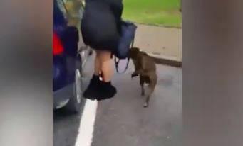 Mondovì, nel tentativo di difendere il suo cane da un pitbull perde gonna e biancheria: donna derisa e filmata