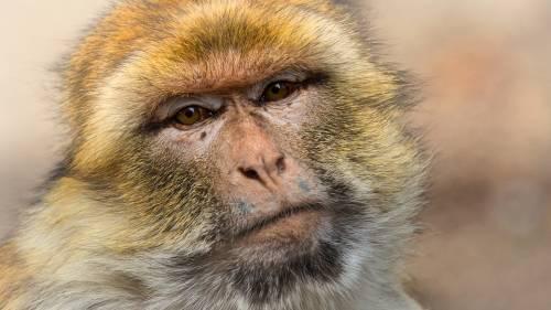 """""""Altro che re della giungla. Siamo scimmie egoiste e ci autodistruggeremo"""""""
