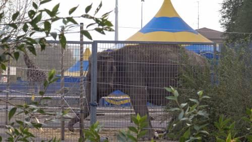 """Gli animali del circo """"parcheggiati"""" sull'asfalto 6"""