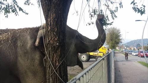 """Gli animali del circo """"parcheggiati"""" sull'asfalto 7"""