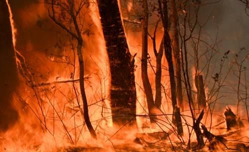 L'Australia minacciata dagli incendi: è emergenza 15