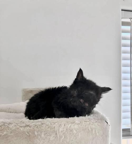 Duo, la gatta venuta al mondo con due teste 2