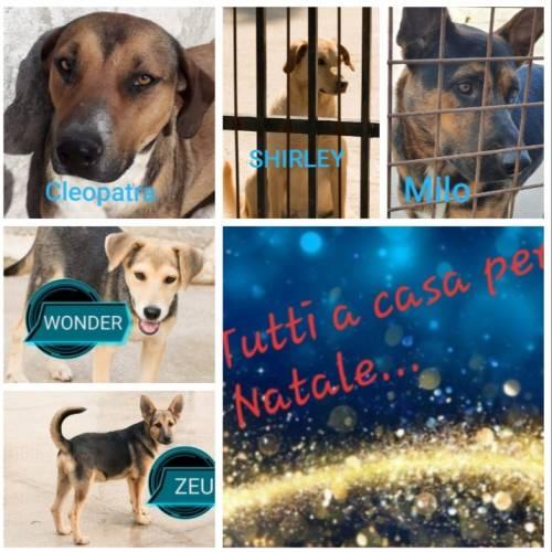 Vieste, i cani del canile dati in adozione davanti alle chiese 2