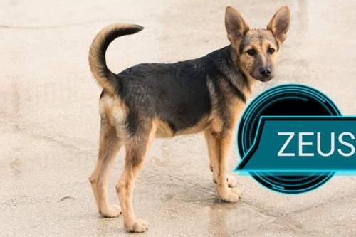Vieste, i cani del canile dati in adozione davanti alle chiese 5