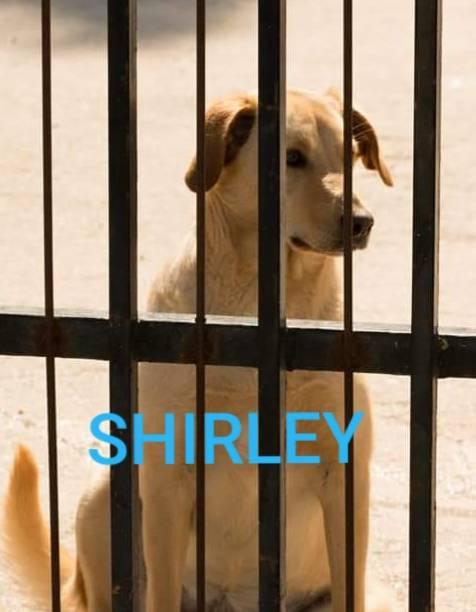 Vieste, i cani del canile dati in adozione davanti alle chiese 6