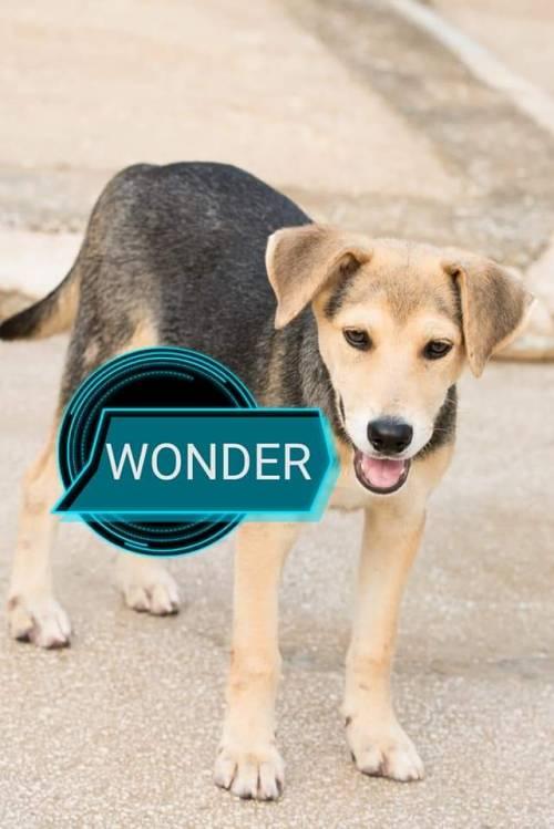 Vieste, i cani del canile dati in adozione davanti alle chiese 7