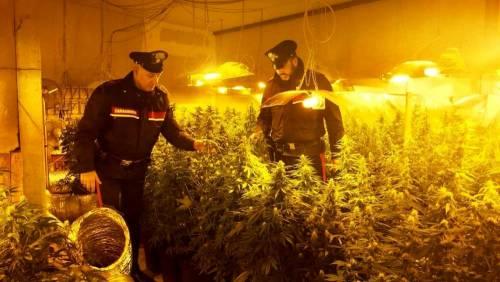 Aveva adibito una stalla alla piantagione indoor di marijuana