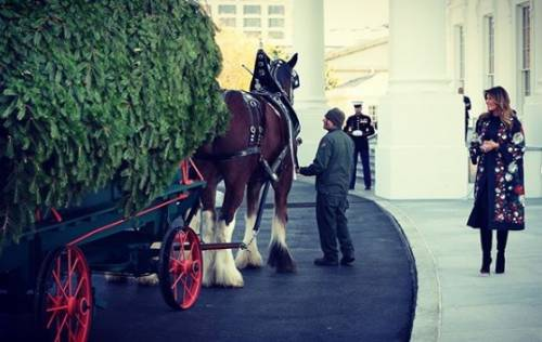 Alla Casa Bianca è già Nataler 7