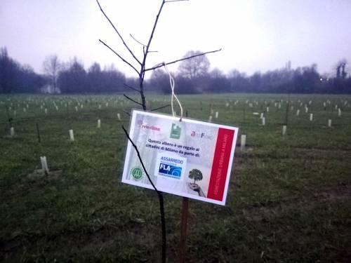 """""""Bosco del design"""" piantato nel Parco Nord Milano il primo albero donato da Assarredo"""