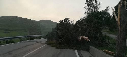 """Tetti crollati, alberi sradicati e decine di feriti: il bollettino """"di guerra"""" del vento 5"""