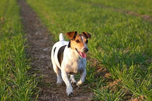 Faenza, cane trova fazzoletto e lo mastica per gioco: morto di overdose