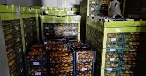 """Maxi sequestro di limoni turchi: """"Non sono idonei al consumo"""""""