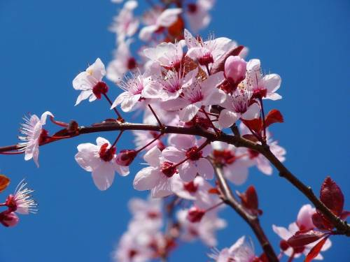 Coldiretti: la finta primavera fa male alla natura