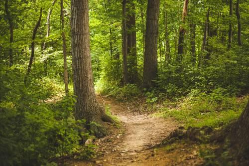 Foreste e boschi, Lombardia terza in Italia. Federlegno: materia prima da valorizzare per diminuire l'import