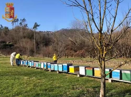 Il miele era una copertura: sgominata banda di spacciatori-apicoltori: 6 arresti