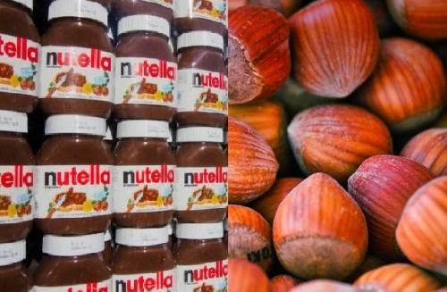Chi ha paura delle nocciole? In Toscana è polemica per la coltivazione decisa da Ferrero