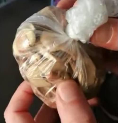 Treviso, insetti nel cibo: chiude il negozio abusivo di un nigeriano