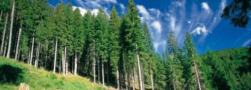 """La """"resilienza del bosco"""" fra cambiamenti climatici e utilizzo ecosostenibile"""