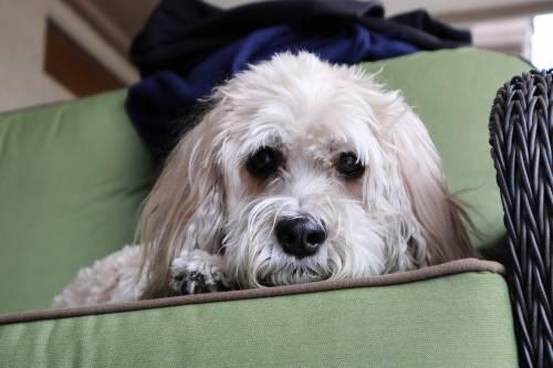 Cane salva la famiglia dal monossido di carbonio