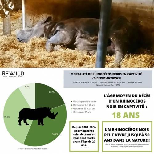 Jacob, il rinoceronte nero morto di fame nello zoo francese