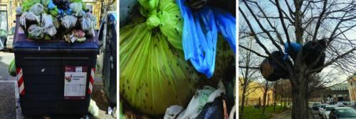 Degrado choc a Roma: insetti sui cassonetti e spazzatura sugli alberi