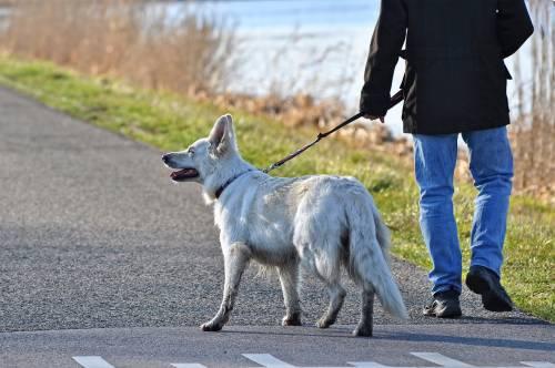 """Coronavirus, il sindaco di Gualdo Tadino: """"Ma dove c.... andate con i cani?"""""""