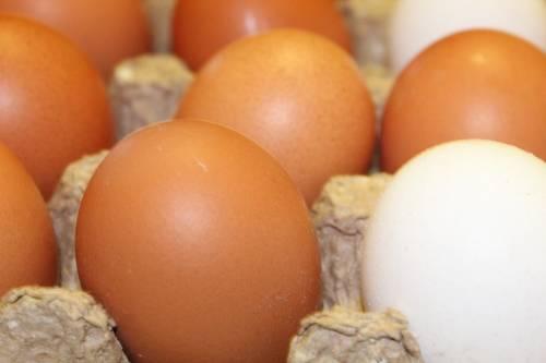 Benevento, rischio salmonella: abbattute mille galline e distrutte 55mila uova