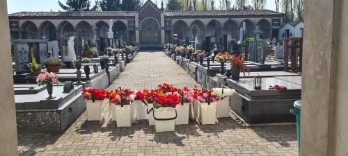 Coronavirus, i tulipani di Arese in dono a cimiteri e case d