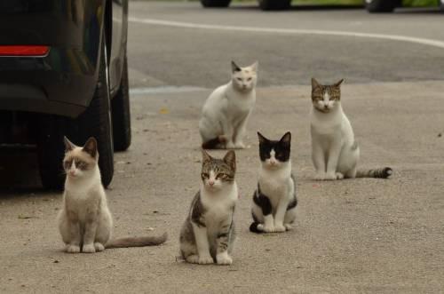 Coronavirus, al via i test sui gatti domestici di Vò