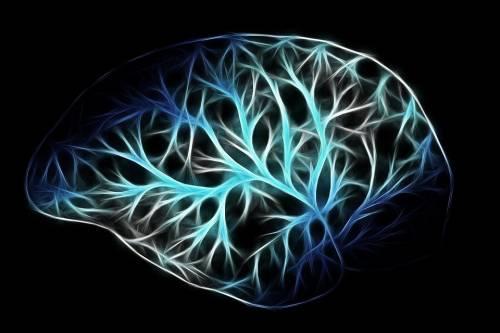 """""""Chi contrae la leishmaniosi non si ammala di Alzheimer"""""""