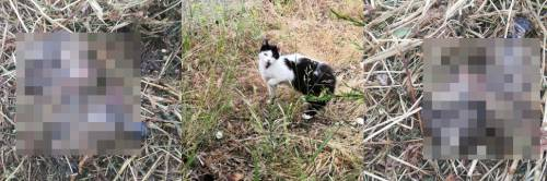 Strage di gatti a Molfetta durante il taglio dell'erba ai giardini pubblici
