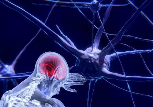 """C'è un """"pulsante"""" per ibernare il cervello: ecco cosa dicono gli scienziati"""