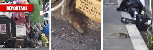 Degrado senza fine: quella fermata dei bus infestata dai topi