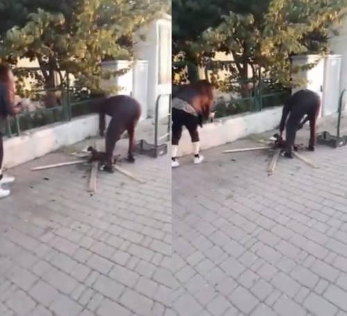 Migrante arrostisce gatto in strada