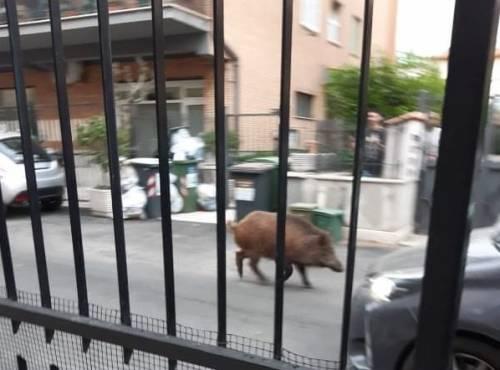 Le palazzine invase dalla spazzatura nel quartiere romano di Cinquina 8