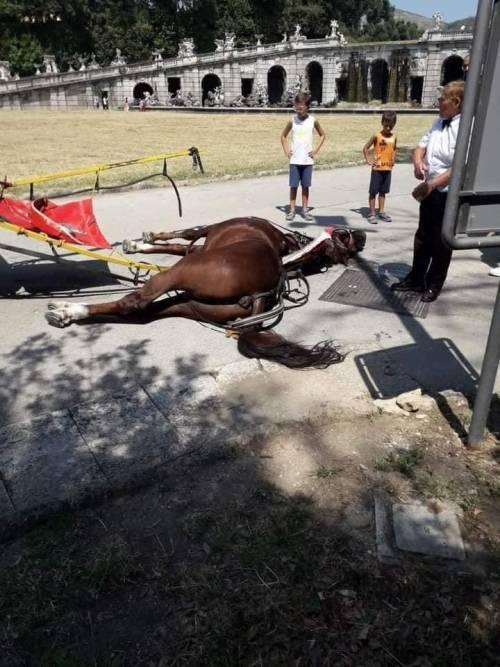 Reggia di Caserta, cavallo muore per il caldo: è bufera sull'uso delle botticelle