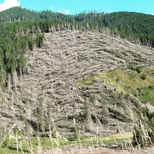 """E a due anni dal """"tifone"""" Vaia la ferita resta aperta: 14 milioni i tronchi abbattuti"""