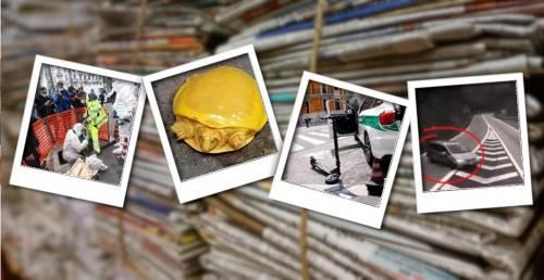 """Una rapina da film e quella tartaruga gialla: le """"follie"""" della settimana"""