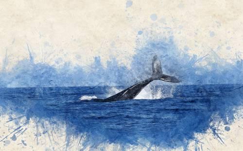 Tutti i colori della Balena bianca