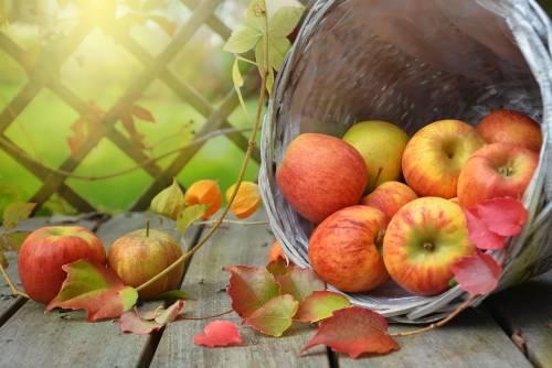 Mela, caratteristiche e virtù del frutto più gustoso