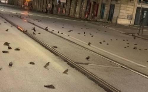 """Centinaia di storni morti per strada. Ma la """"piaga di Roma"""" sono i petardi."""
