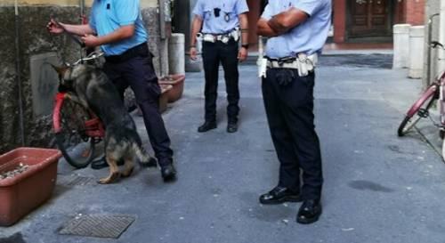 """""""Caccia all'uomo con i cani contro clochard e parcheggiatori abusivi"""". """"No, solo lotta alla criminalità"""""""