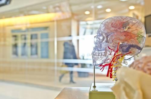 Ictus, una nuova procedura aiuta la rigenerazione dei vasi sanguigni
